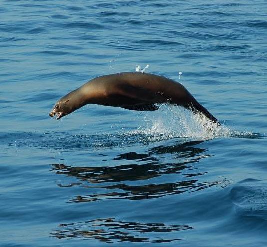 Ocean Seals